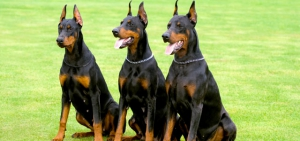 Personal Protection Dog - Things You Should Know And Consider