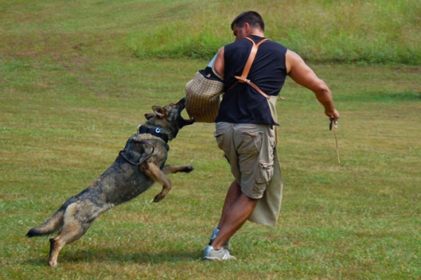 Protection And Guard Dog Training